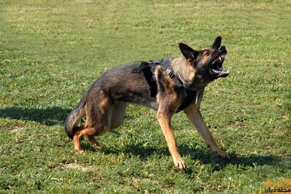 تفسير حلم هجوم الكلاب في المنام